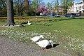 Wilhelminapark Breda P1360769.jpg