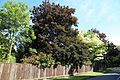 Willingale, Essex, England - The Street fence and trees.JPG
