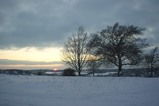 Winter on Farthing Downs - geograph.org.uk - 1655480
