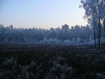 Winterimpression Schwarzes Wasser, Heide.jpg
