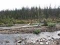 Wolf Survey, Denali, 2003 (0bc5c447-2eb7-4d9e-91b7-985280bddbe8).jpg