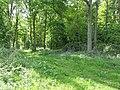 Woodland Track. - geograph.org.uk - 426778.jpg