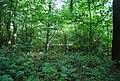 Woodland by Brittain's Lane - geograph.org.uk - 2048840.jpg