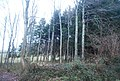 Woodland by Thorncombe Lane - geograph.org.uk - 1657101.jpg