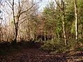 Woodland footpath - geograph.org.uk - 102109.jpg