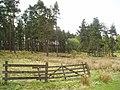 Woodland near Newbigging - geograph.org.uk - 168974.jpg