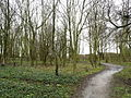 Woodland near to Paull Fort - geograph.org.uk - 750393.jpg