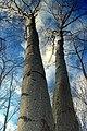 Woods Walk (1) (24862326955).jpg