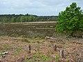 Woolmer Forest - geograph.org.uk - 439669.jpg