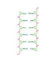 Wu 'Straight Ladder' DNA structure, second duplex.jpg