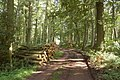 Wye Valley walk through Capler Wood - geograph.org.uk - 1434363.jpg