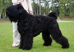 Dog Age Large Breed