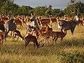 Zebras and Impalas - Mikumi National Park - Tanzania (8891661171).jpg