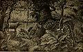 À travers la forêt brésilienne - De l'Amazone aux Andes (1919) (14791237533).jpg
