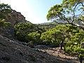 Πευκόδασος (Pinus brutia) στην περιοχή Μονής Κουδουμά.jpg