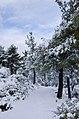 Χειμωνιάτικο τοπίο.jpg