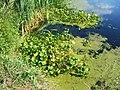 Берег озера у Андреевские выселки - panoramio.jpg