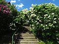 Ботанічний сад ім. М.Гришка IMG 9169.jpg