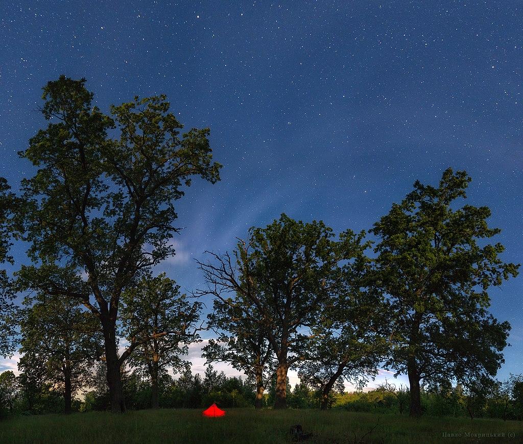 Вікова ацидофільна діброва в Древлянському заповіднику близ села Лозниця IMGP4847 IMGP4891-45-images