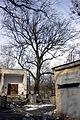 Віковий дуб-красень 05.jpg