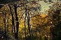 Есенна палитра.jpg
