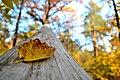 Золота прекрасна осінь.jpg