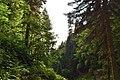 """Лес в парке водопадов """"Менделиха"""".jpg"""
