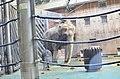 Московский зоопарк. Фото 23.jpg