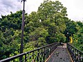 Міст закоханих у Маріїнському парку 2.jpg