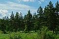 Начало памятника природы регионального значения «Сурки».jpg
