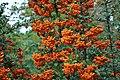 Осінь в ботанічному саду ТНУ імені В. І. Вернадського.jpg