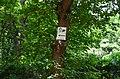 Парк Берёзовая роща в Киеве. Фото 15.jpg