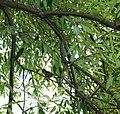 Петропавловский парк, птицы 2.jpg