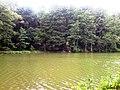 Природа озера.jpg