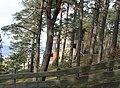 Саулкрасты (Латвия) Заброшенный мотель на дюнах - panoramio.jpg