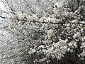 Снежные цветы в Царях.jpg