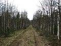 Старая лесовозная дорога (abandoned road) - panoramio.jpg