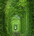 Тунель Кохання.jpg