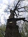 Украина, Киев - Голосеевский лес 16.jpg