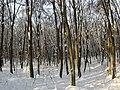 Украина, Киев - Голосеевский лес 170.jpg