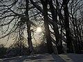 Украина, Киев - Голосеевский лес 24.jpg