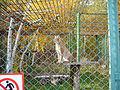 Якутский зоопарк 17.JPG