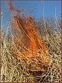 آتشی در خرمن - panoramio.jpg