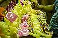 تصنيع حلاوة المولد2.jpg