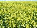 من گل زار را دوست دارم - panoramio.jpg