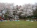 お花見 2008 - panoramio.jpg