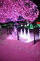 一月の青森市の「光の散歩道」、雪の桜 - panoramio (1).jpg