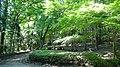千波公園少年の森 - panoramio (2).jpg