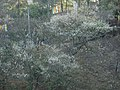 嘉義縣梅山鄉 梅山公園 - panoramio.jpg