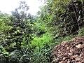 惠州博罗红花嶂越野穿越-大救援20140524-25 - panoramio (1).jpg